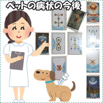 ケルト『愛犬の病気の今後』